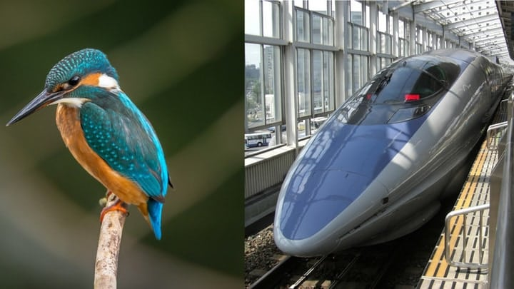 Bullet train kingfisher bird