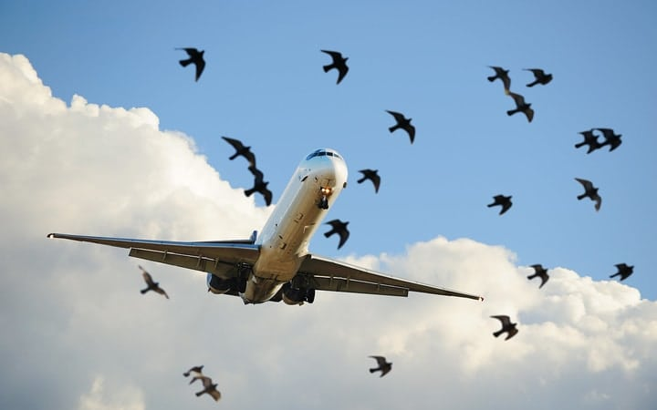 Birds airplane