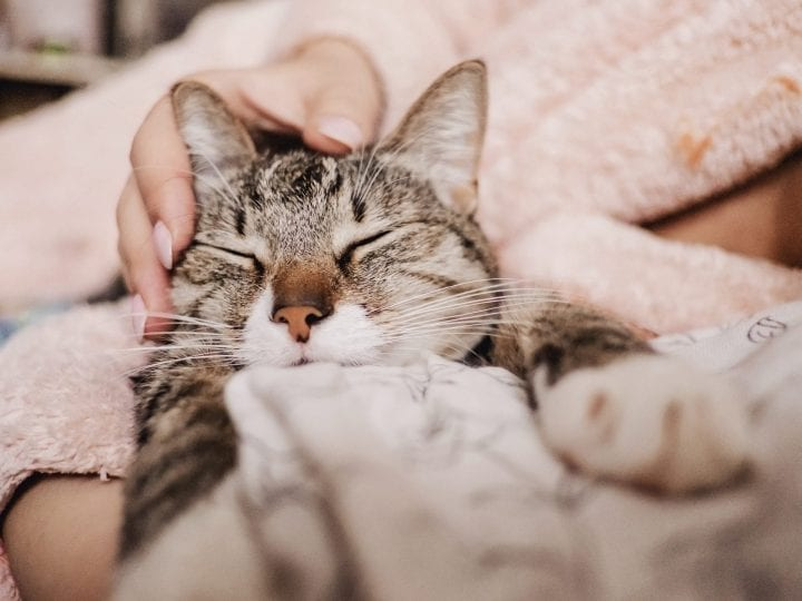 Cat cuddling purring cute
