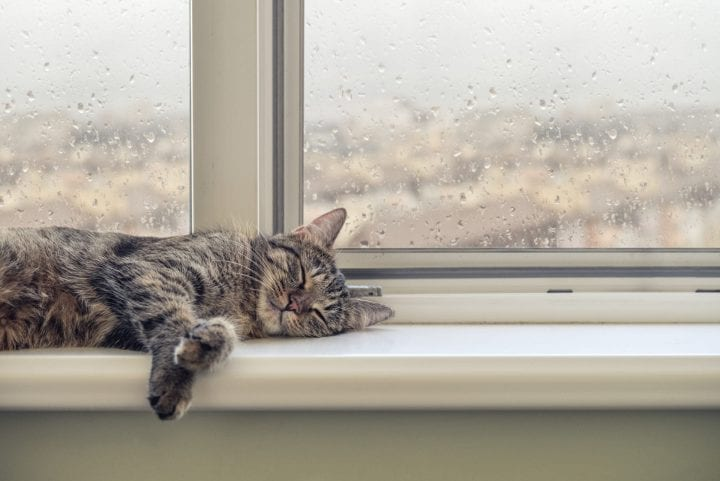 Cat sleeping window sill