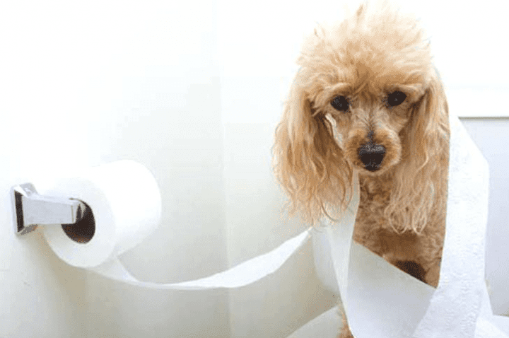 Why Cats And Dogs Do The Weird Things That They Do Science 101