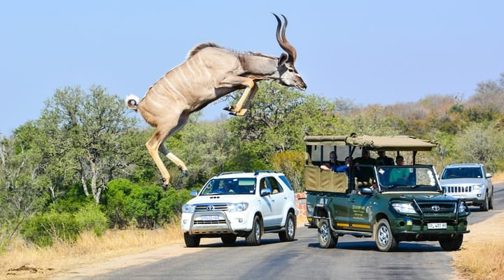 Kudu antelope road cars