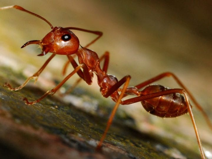 Ant deadliest animals