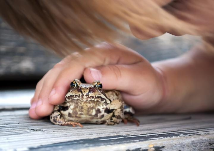 Does touching a toad actually cause warts?