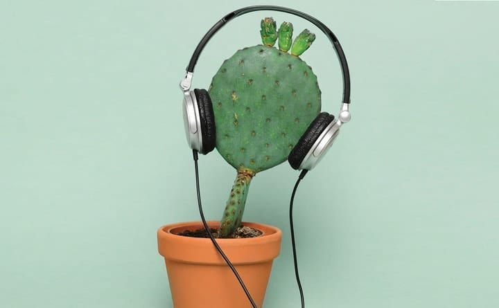 Cactus with headphones on