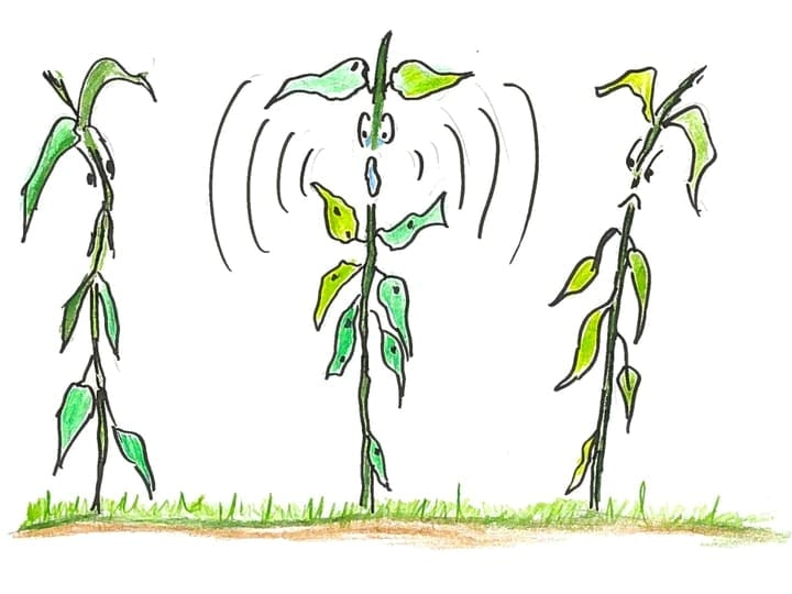 Plant cartoon communication