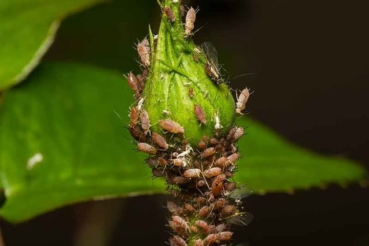 Plant insects under attack
