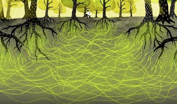 Wood wide web illustration trees