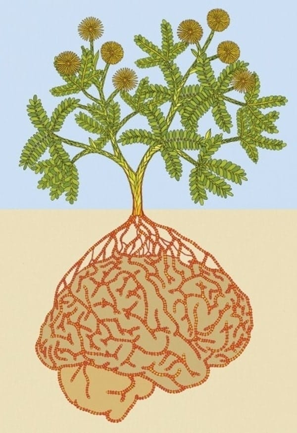 Plant roots as brain