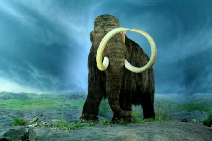 a woolly mammoth looking majestic