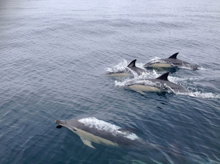 Ugh: humans are ruining dolphins' mating rituals | Science 101  Ugh: humans are...