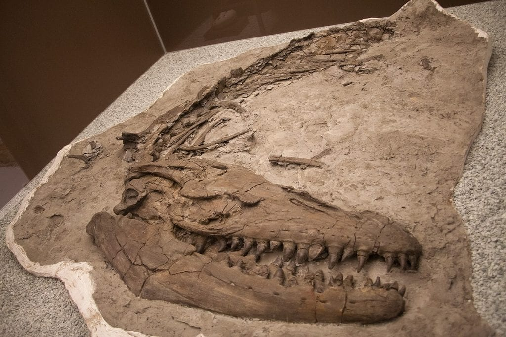 These fossil pictures showcase what we love about dinosaurs