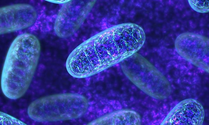 Your mitochondrial DNA might not just come from mom