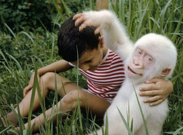 Animal Kingdom 30 Rare Albino Animals From Around The World Science 101 30 Rare Albino Animals That People Cant Help But Love Science 101