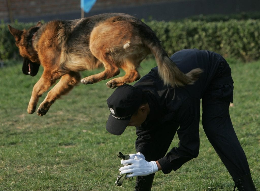 The CIA's top dog training techniques