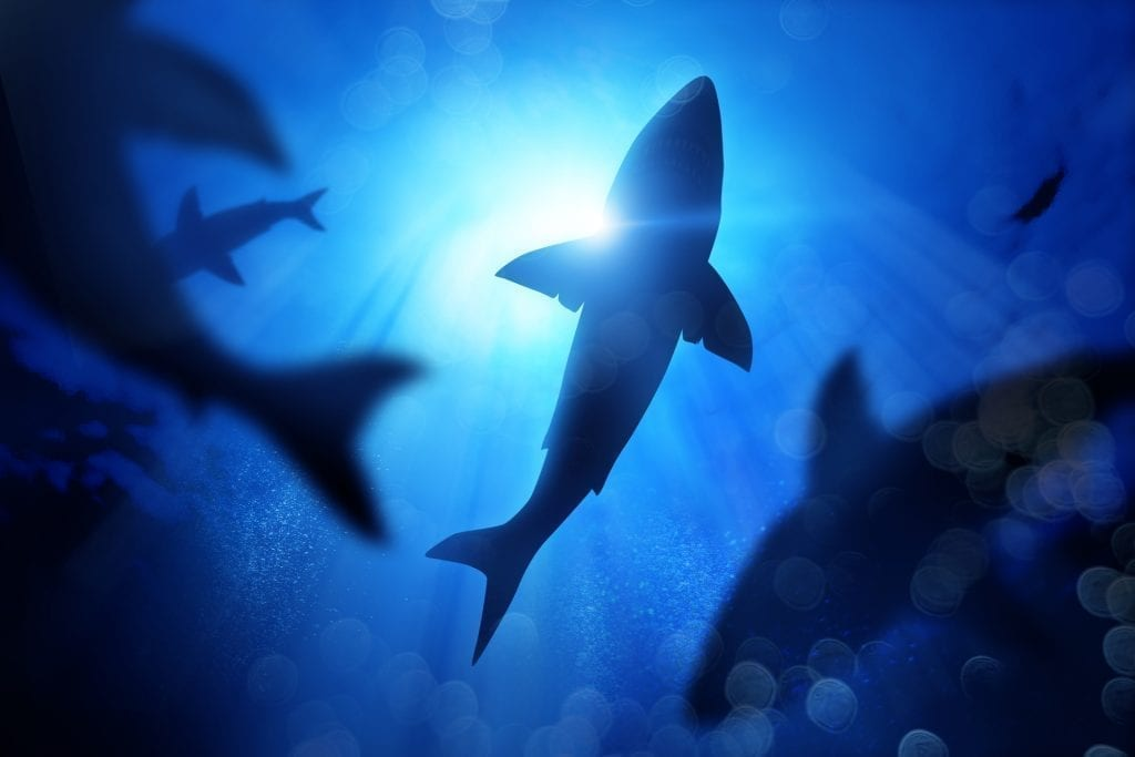 Shark populations have dropped by 92% in only 50 years