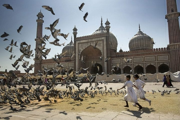 Flock of pigeons take off