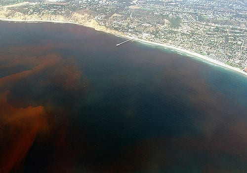 Red tide beach