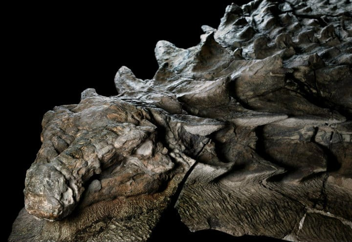 Man finds a dinosaur fossil so well preserved it looks perfectly life-like