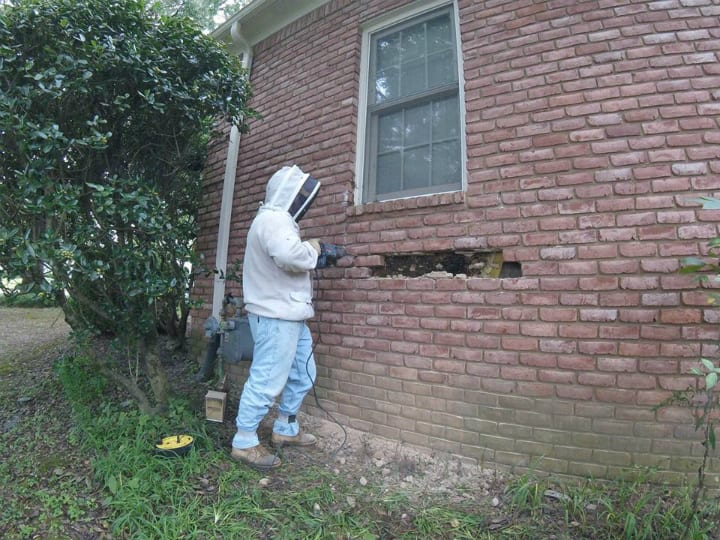 brick house bee whisperer beehive