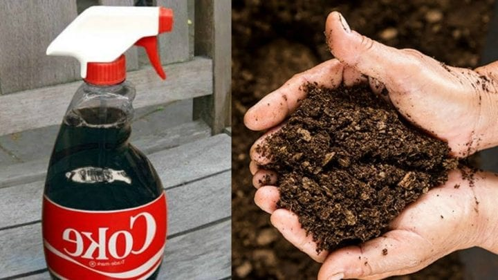 a bottle of coke next to handful of fertilizer