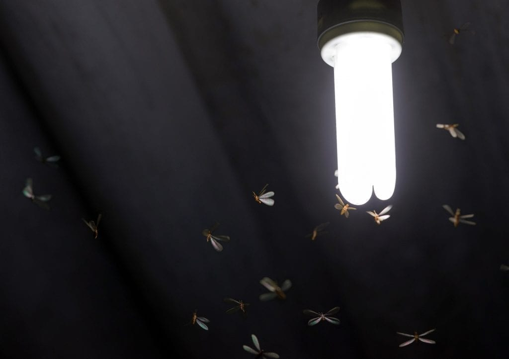 Like a moth to a lamp: The scientific reasons moths and other insects are attracted to bright lights