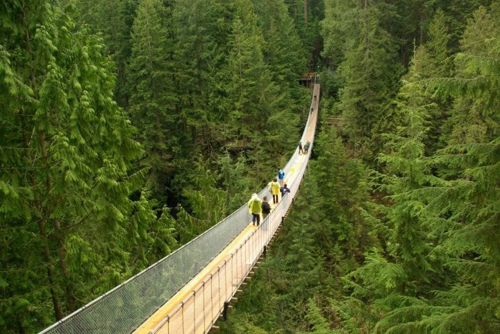 Gotta go to Capilano Bridge when family comes!
