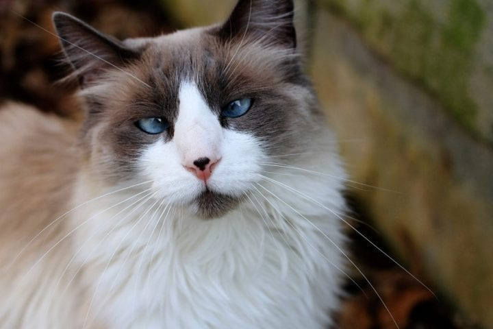 Cross eyed cat nose markings unique