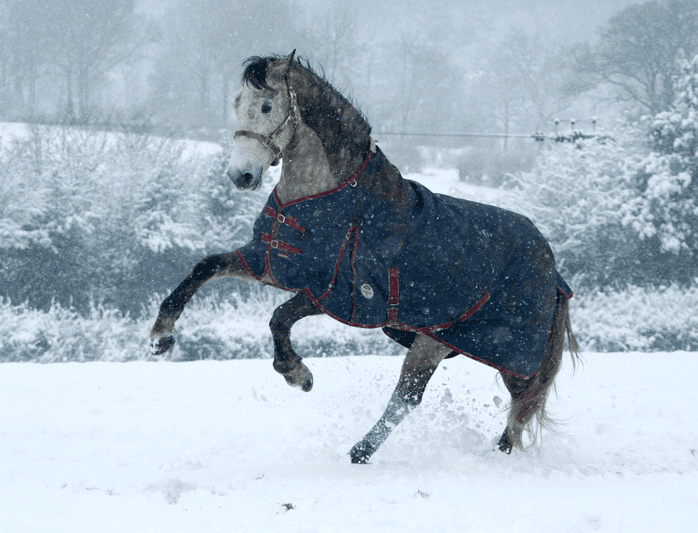 Horse blanket in winter