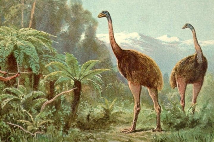 moa birds standing in a drawing