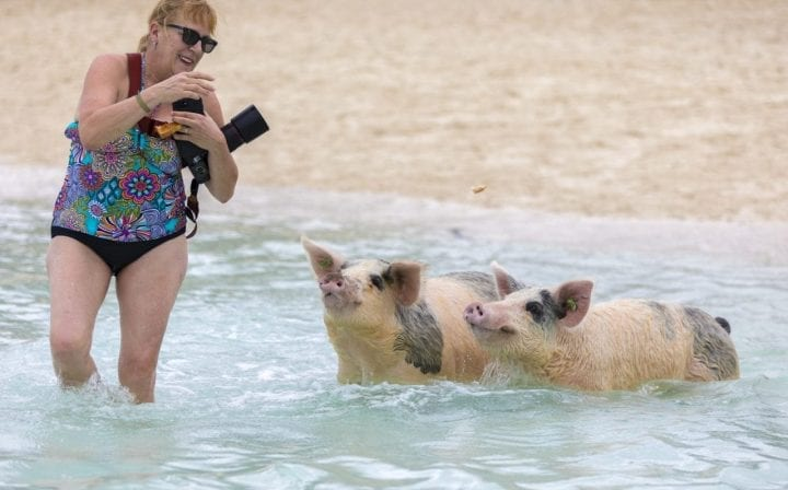 Woman with swimming pigs