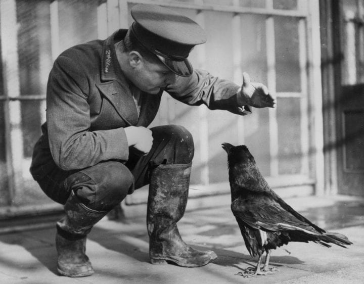 Zookeeper teaching raven to talk