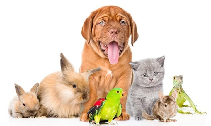 Common pet health problems to look out for