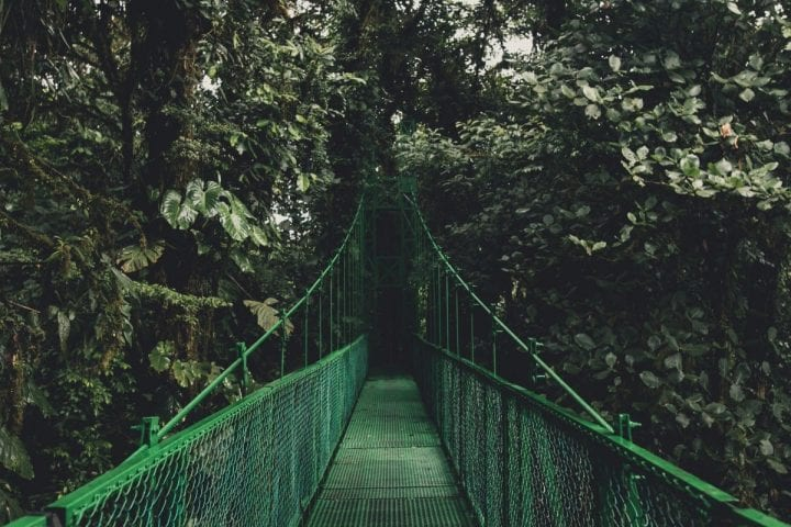a bridge in the middle of the rainforest