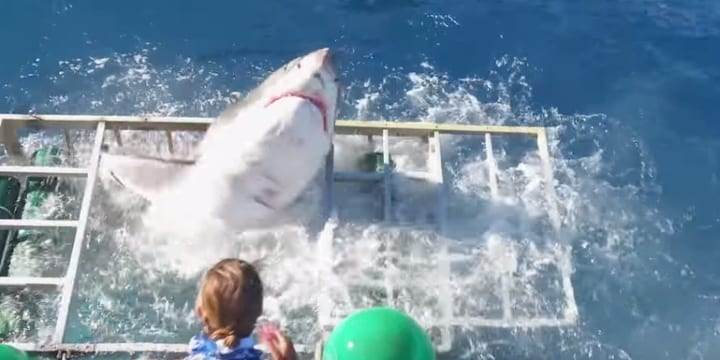 Man gets into cage surrounded by sharks. There was only one way out.
