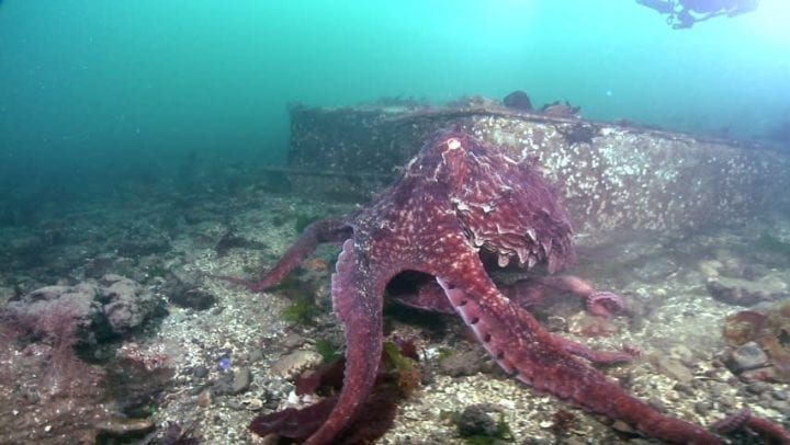 an octopi on the bottom of the sea