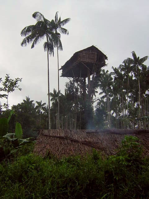 korowai tree house people dangerous home