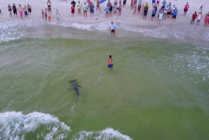 man catches photo of shark