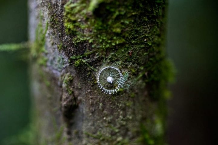 Scientists Found these Bizarre Rings in the Amazon. Nobody Knew What they Were—Until Now