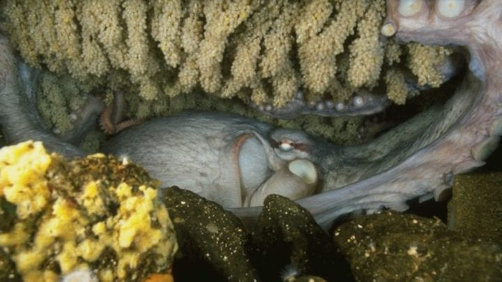 octopus is stuffed into a cave