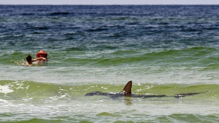 Shark swims by mother and child