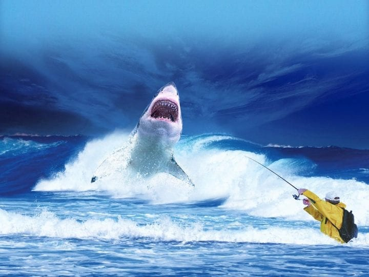 shark getting pulled from the water with a fishing lure