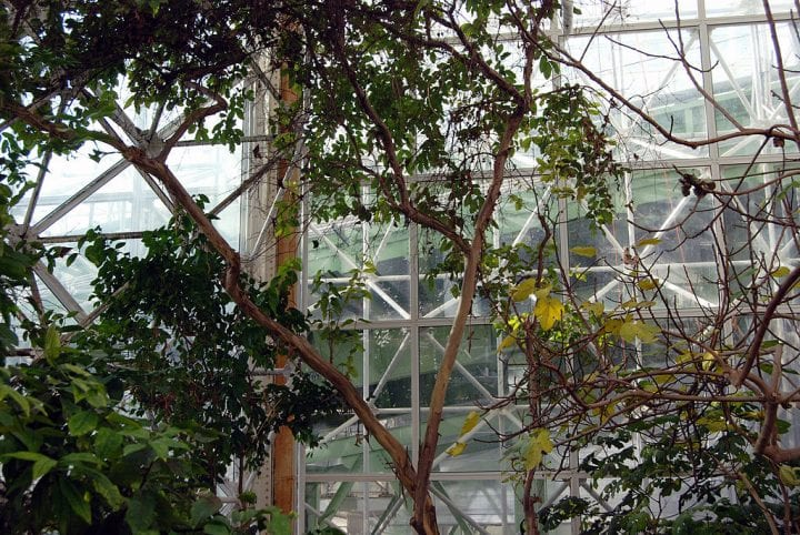 a look at the glass of the biodome