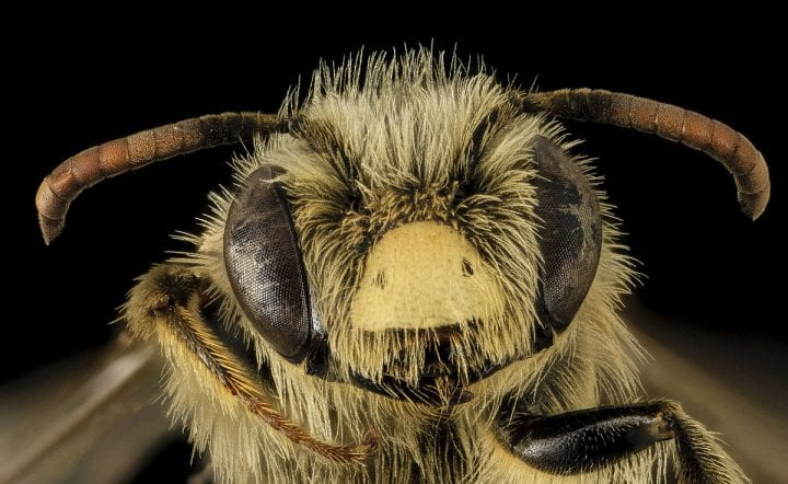a killer bee through a microscope