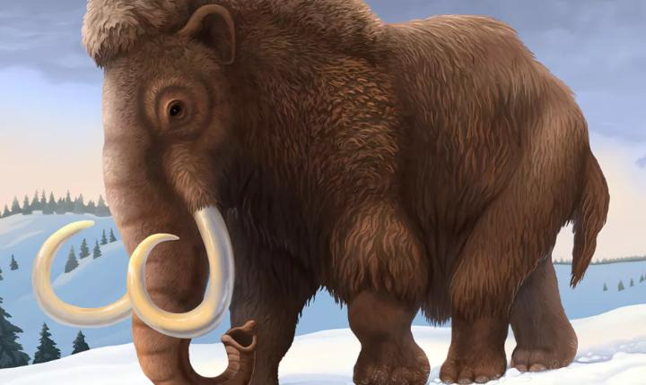 Woolly Mammoth Cells Brought Back From The Dead By Japanese Scientists
