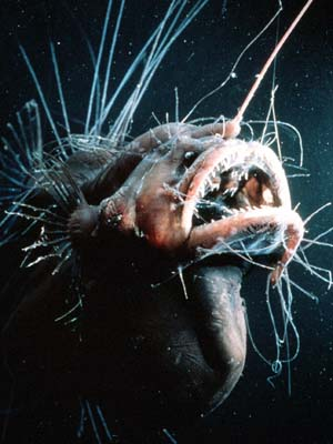 Anglerfish deep sea weird strange animal behavior