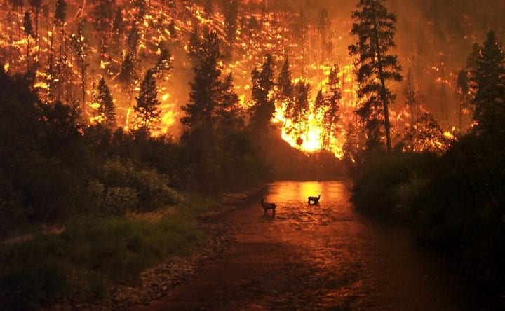 wildfire takes over deers in river