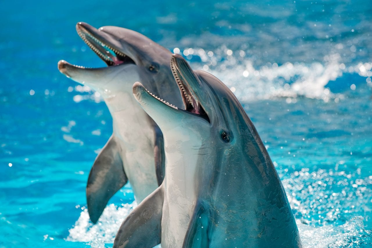 Dolphin animal cute dark truth