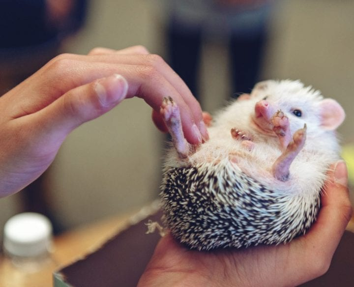 Hedgehog cute animal dark truth