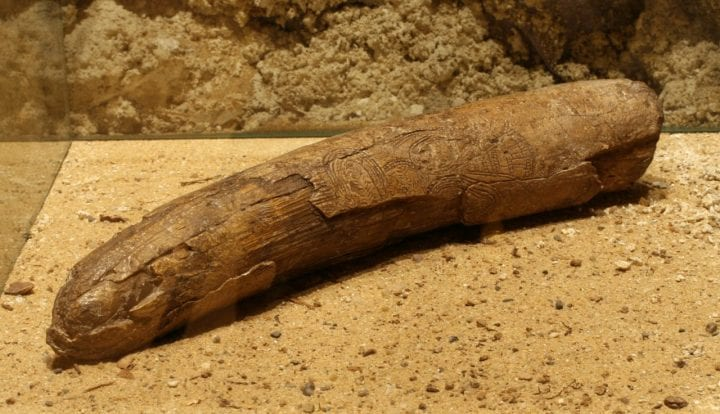 mammoth tusk with engravings on it